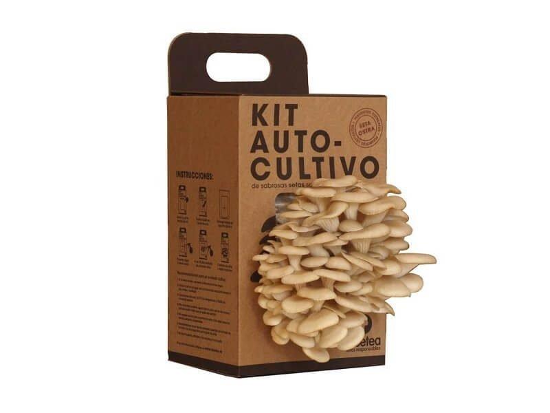 Kit de Autocultivo de seta